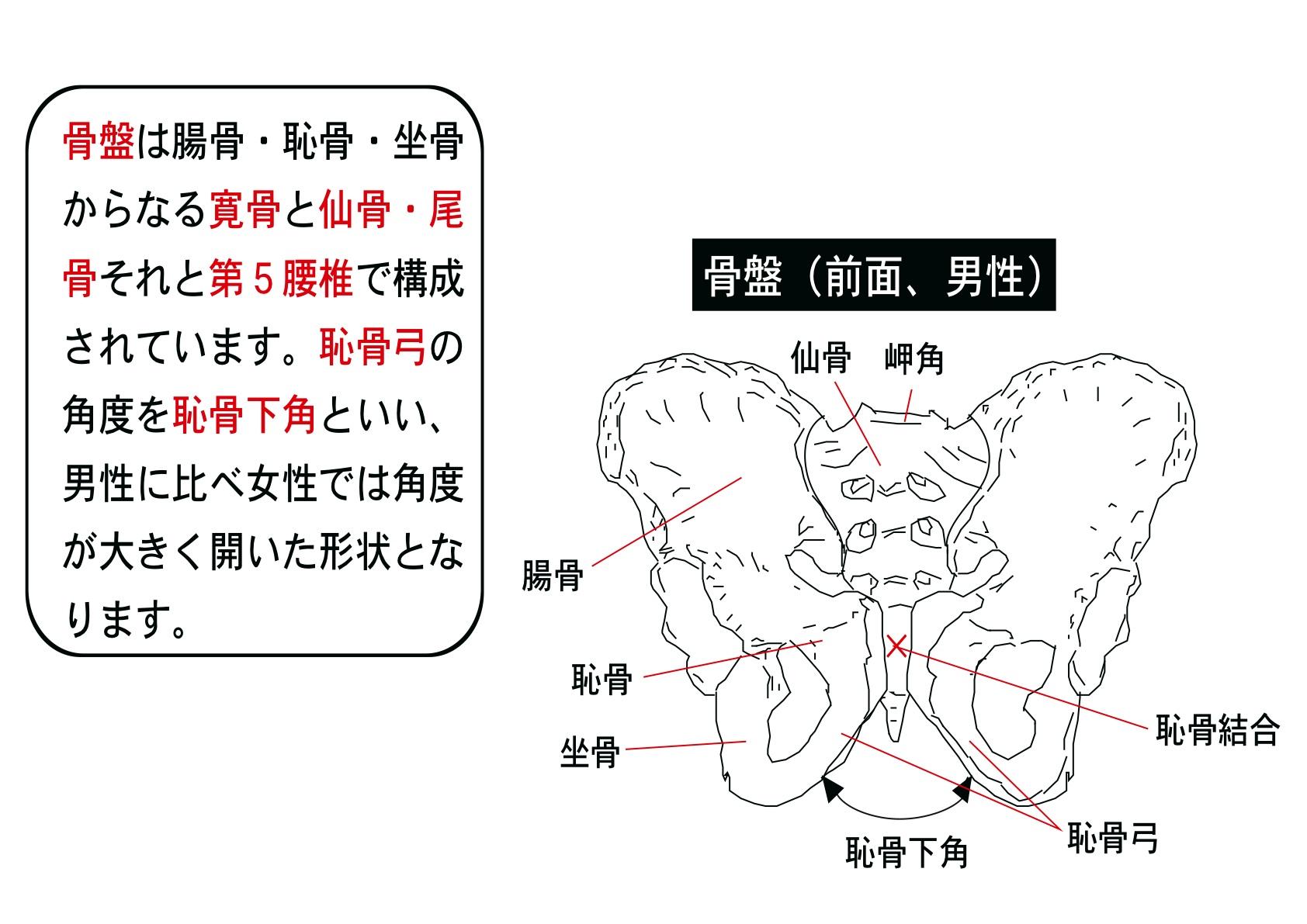 看護学生のために(by 白鳥恭介) | SSブログ